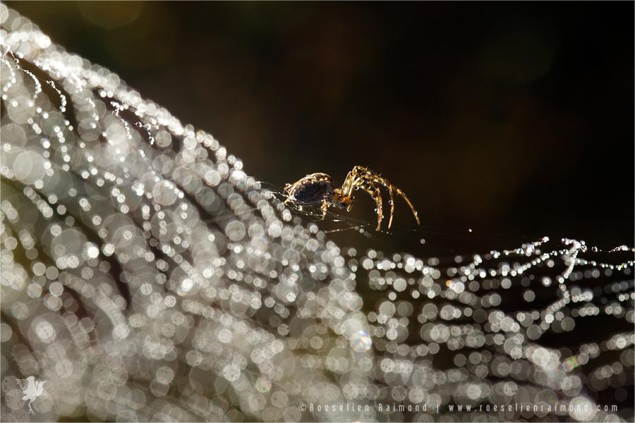 spinnenweb_bokeh